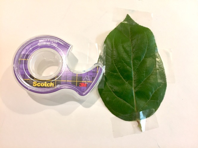 leaf-rubbing-tape-leaf