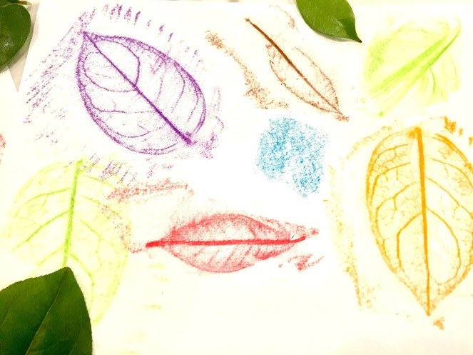 leaf-rubbings-layed-out